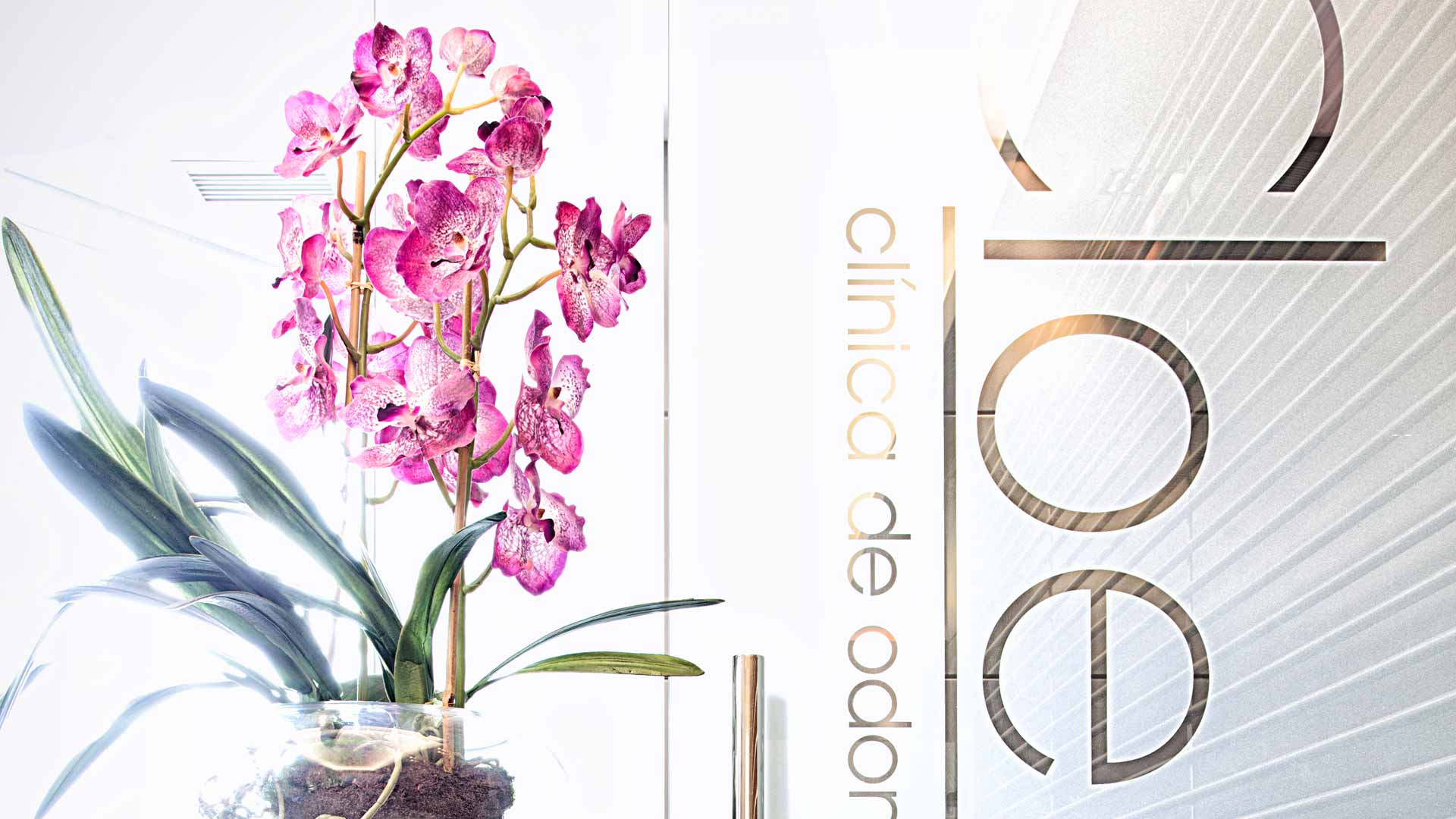 A plant with pink flowers stands next to a glass door in Clinica Cloe dental clinic