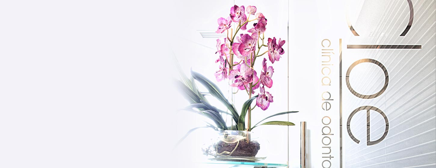 A plant with pink flowers sits on a table next to a glass door inside Clinica Cloe in Madrid.